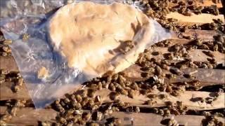Como se preparan las colmenas antes de entrar al invierno en Argentina