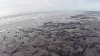 Cardigan United Kingdom  city pictures gallery : Bronze Age forest at Borth, Cardigan Bay Wales UK