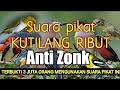 Download Lagu Kombinasi suara pikat kutilang ribut anti zonk Mp3 Free