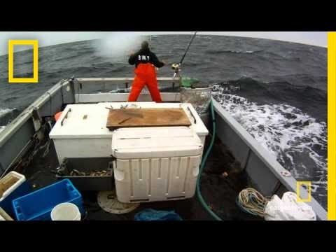 Wicked Tuna - Stormy Catch