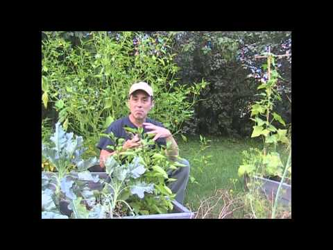 Garden tips - Start the timer and let's go!! Yes 5 common sense useful garden tips in less than 5 minutes. Can Ray do it or will he ramble on and talk for 30 minutes AGAIN...