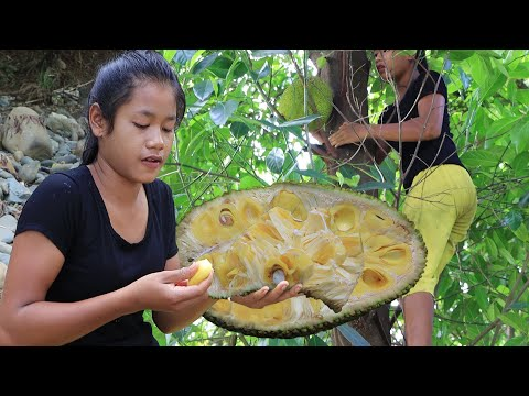 Survival skills in the forest - Find meet Ripe jackfruit for Food & Show eating delicious