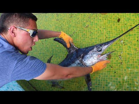 PET JAWS VS SWORDFISH Aquarium POND BATTLE!