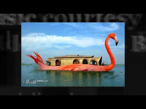 When Graphic Artists Get Bored - Chop A Flamingo 6 [Worth1000]