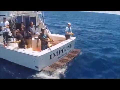 Hectic Tuna Fishing San Diego,  Aerial Video, from Dana Landing