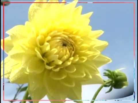 Video New song 2018   BHOLA KE Jab Jab download in MP3, 3GP, MP4, WEBM, AVI, FLV January 2017