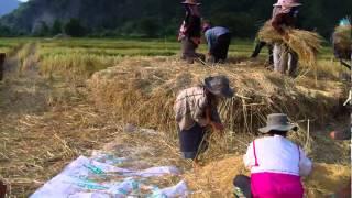 Ntaus nplej nyob zos Nas Xoos, Vang Vieng-Laos