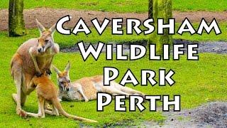 Caversham Australia  City new picture : Koopify GoPro ✪ Caversham Wildlife Park, Perth, Australia