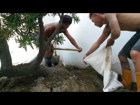 2 thánh xúc cát =))