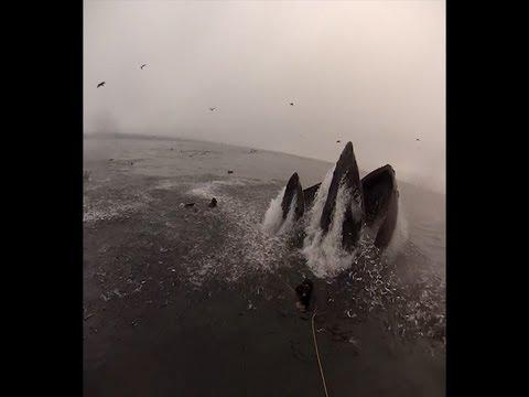 un sub rischia di essere ingoiato da una balena!