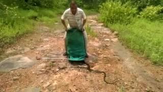 Wypuszczanie 285 węży na wolność prosto z wora