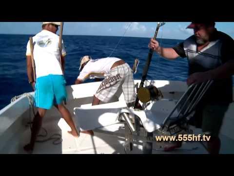 скорость ловли тунца