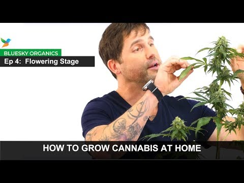 Ep 4 - Flowering Stage Instructions - Craft Cannabis @ Home