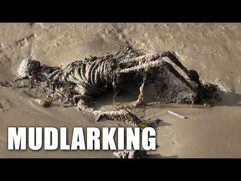 Mudlarking Surprises In The River Thames Mud London