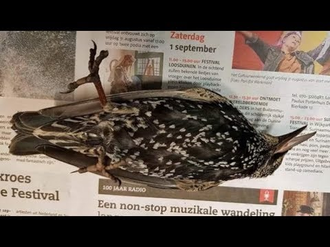 Hundreds Of Birds Fall From The Sky During 5g Test In The Netherlands