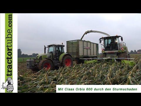 Mais mit Sturmschaden häckseln mit neuem Claas Jaguar 940 und Orbis 600 - LU Volksbank