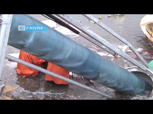 Сортировка леща на рыбной фермер в Португалии-FAIVRE.RU