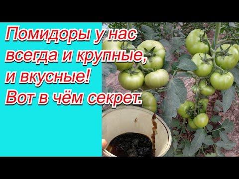 Подкормка томатов, как это сделать