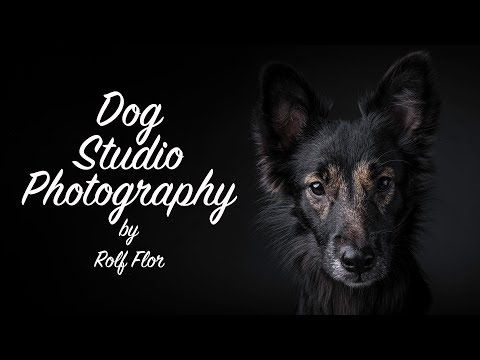 Dog studio photography - This is how I work!