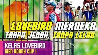 Video [SIEN RONNY CUP] Lovebird MERDEKA Ngekek Tanpa Jedah, Tanpa Lelah MP3, 3GP, MP4, WEBM, AVI, FLV Maret 2018