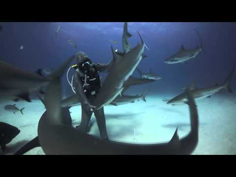 Haaienfluisteraar Cristina Zenato
