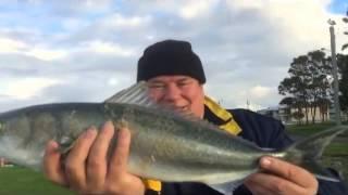 Swansea Australia  city photos : Salmon Fishing Swansea NSW Australia
