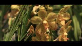 Archep Nokkasae Orchid Farmer - Thai TV Show