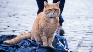 Nonton A Street Cat Named Bob - Official Trailer - At Cinemas November 4 Film Subtitle Indonesia Streaming Movie Download