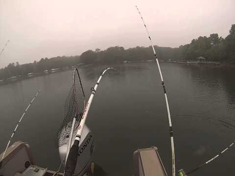 Lake Norman, April 25, 2014. Triple Catch On The Blue Catfish (видео)