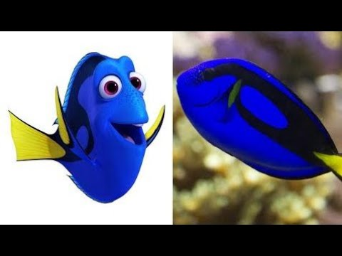 Cartoon characters in real life -  Finding Dory in Real Life