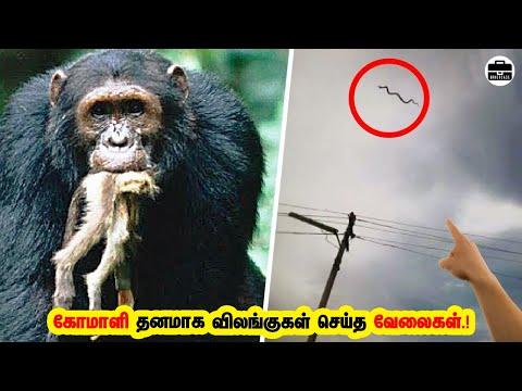 கோமாளி தனமான விலங்குகளின் நடவடிக்கைகள்! 9 Most Strangest Animal Behaviors!