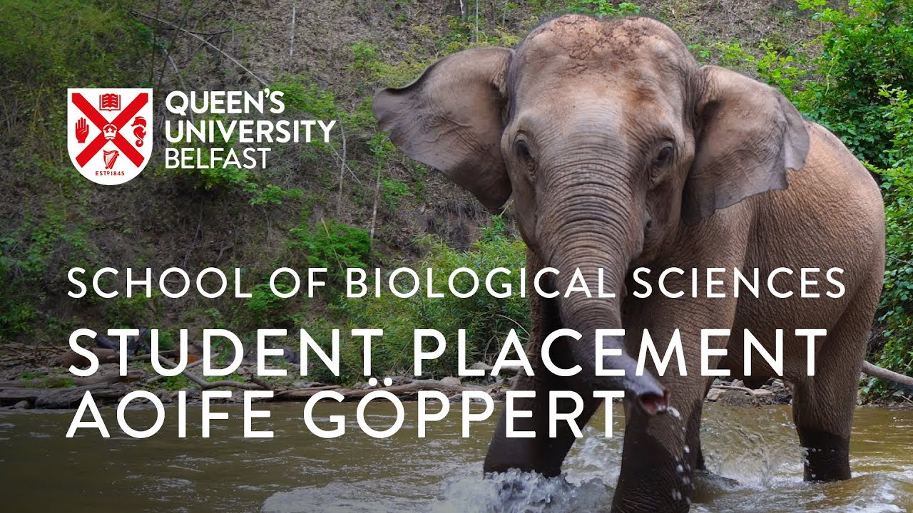 School of Biological Sciences Work Placements: Aoife Göppert