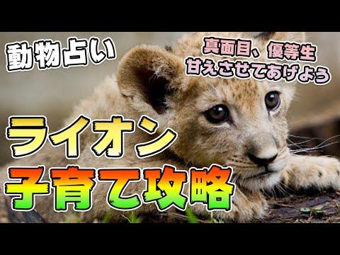 【個性心理学】ライオン 子育て攻略法 vol.294