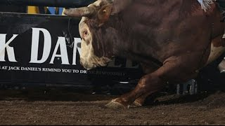 WRECK: Jessie Byrnes takes a hit from Time Bomb for Shane Proctor  (PBR)