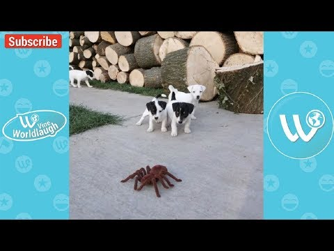 Try Not To Laugh Watching Funny Animals Compilation January 2018 #3 - Vine Worldlaugh