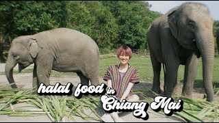 Video HALAL FOOD IN CHIANG MAI #03 MP3, 3GP, MP4, WEBM, AVI, FLV Juli 2019