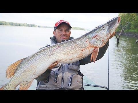 О такой рыбалке можно мечтать! Щуки-монстры в ломовом коряжнике (видео)
