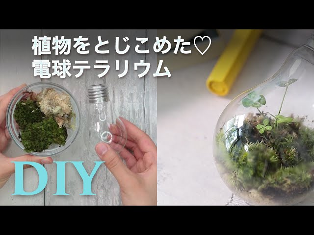 *電球テラリウムが可愛すぎる*保存版DIY×グリーンアイデア