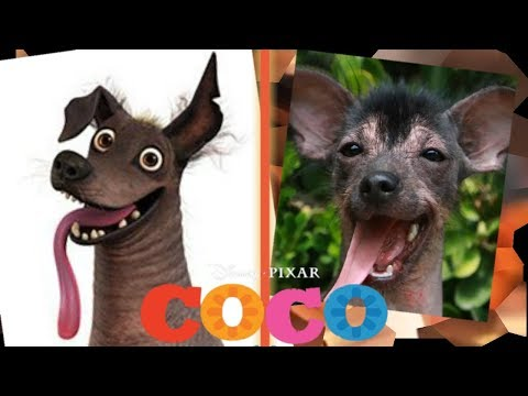 COCO in Real Life!