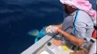 صيادون خليجيون يصطادون سمكة عملاقة ذات الوان مذهلة