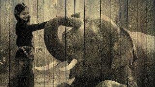 Tutorial Photoshop CS6 italiano - Effetto Artistico - Come fondere una foto con uno sfondo in legno in modo creativo, creando un disegno in bianco e nero con effetto penna grafica inciso sul legno.pattern di legnohttps://static.pexels.com/photos/132205/pexels-photo-132205.jpegfoto della ragazza con l'elefantehttps://pixabay.com/it/ragazza-bambini-africa-animali-1822525/By ShadowTutorialsWEBSITEhttp://shadowtutorials.altervista.orgGoogle+https://plus.google.com/u/0/117360610093810112916/postsFacebookhttps://www.facebook.com/ShadowTutorials-353161314706188musica utilizzata:Huma Huma - First Day