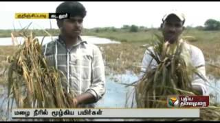 Crops in 150 acres ready for harvest submerged in water in Cuddalore