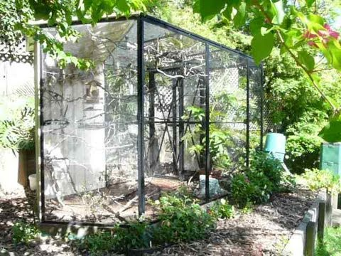 aviary - Here is the finch aviary after it has settled in for 1.5 years. This video tour includes lots of tips on how to set up a natural-looking garden aviary like t...