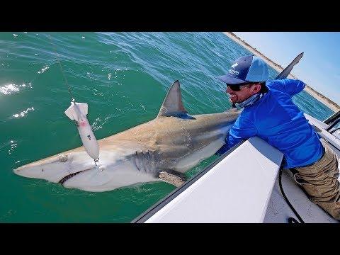 Best Topwater Shark Fishing Ever!! - Thời lượng: 19 phút.