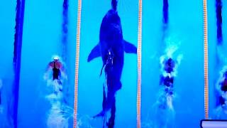 The world's most decorated athlete took on the ocean's most efficient predator, the Great White Shark, in a television special aired...