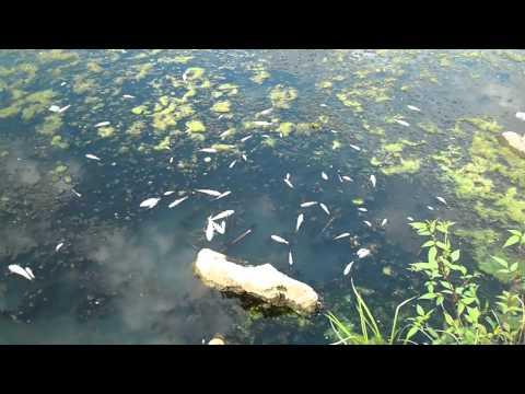 клев рыбы в октябрьский район