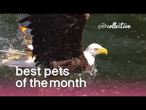 The Best Pet Videos of the August 2019
