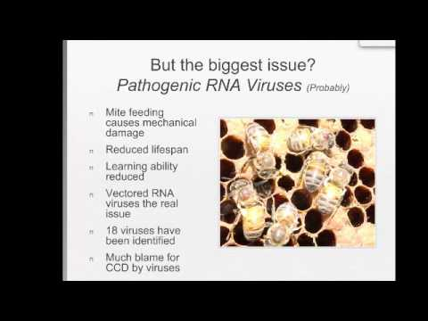 Parasitic Mites and Honey Bees