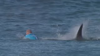 Jeffreys Bay South Africa  city photos gallery : Jaw-dropping: Surfer fights off shark attack live on TV in S. African competition