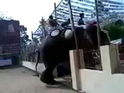 Video Elephant Attack download in MP3, 3GP, MP4, WEBM, AVI, FLV January 2017